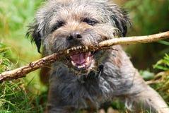 Hond met stok Stock Afbeeldingen