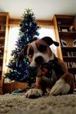 Hond met stuk speelgoed en Kerstboom stock afbeeldingen