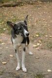 Hond met tekort van het oog Eenogige hondtribunes op spoor in het park Veterinaire, dakloze dieren royalty-vrije stock afbeelding