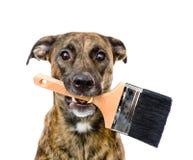 Hond met verfborstel Geïsoleerdj op witte achtergrond Royalty-vrije Stock Foto