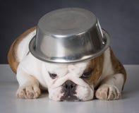 Hond met voedselkom op hoofd Stock Afbeelding