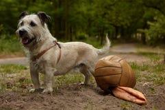 Hond met voetbal Royalty-vrije Stock Foto's