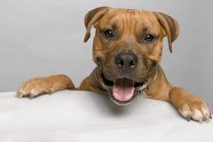 Hond met voorbenen op lijst Royalty-vrije Stock Foto's