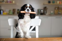 Hond met worst illustration stock fotografie