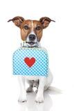 Hond met zak Stock Afbeeldingen