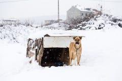 hond met zijn hondehok op een sneeuwdag Stock Fotografie