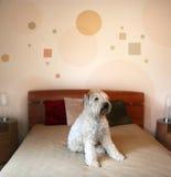 Hond in moderne slaapkamer stock foto
