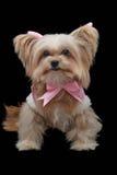 Hond in Mooie Roze Kleding royalty-vrije stock fotografie