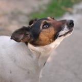 Hond in motie stock foto