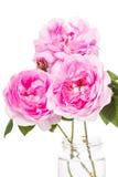 Hond-nam roze bloemen toe Royalty-vrije Stock Afbeeldingen