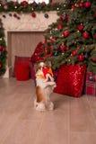 Hond nieuw jaar royalty-vrije stock afbeelding