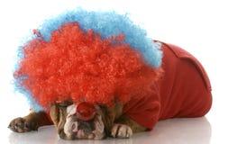 Hond omhoog gekleed als clown Royalty-vrije Stock Fotografie