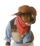 Hond omhoog gekleed als cowboy Royalty-vrije Stock Foto