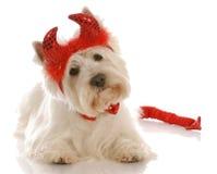 Hond omhoog gekleed als duivel Royalty-vrije Stock Foto