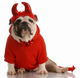 Hond omhoog gekleed als duivel Stock Afbeelding