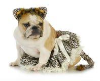 Hond omhoog gekleed als een kat Stock Afbeeldingen