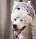 Hond omhoog gekleed als kat Stock Foto's