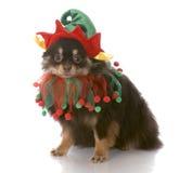 Hond omhoog gekleed als santaelf Stock Afbeelding