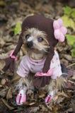 Hond omhoog gekleed als schoolmeisje Royalty-vrije Stock Afbeeldingen