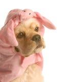 Hond omhoog gekleed als varken royalty-vrije stock fotografie