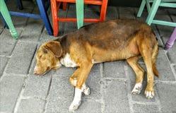 Hond onbeweeglijk Stock Foto's
