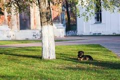 Hond onder een boom Royalty-vrije Stock Fotografie