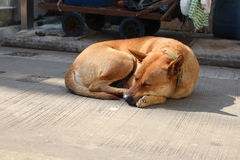 Hond onder zonsondergang royalty-vrije stock afbeeldingen