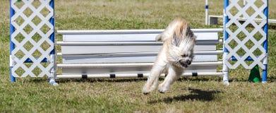 Hond ongeveer aan land Royalty-vrije Stock Afbeelding