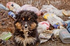 Hond op autokerkhof Royalty-vrije Stock Fotografie