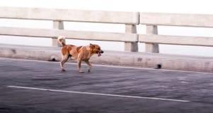 Hond op brug in werking die wordt gesteld die stock foto
