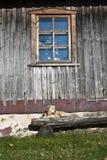 Hond op de bank Stock Fotografie