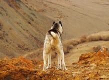 Hond op de berg Stock Foto