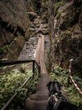 Hond op de bergsleep stock foto's