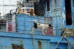 Hond op de boot Royalty-vrije Stock Foto's