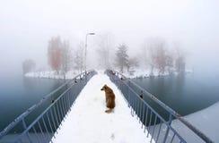 Hond op de brug ivano-Frankovsk Royalty-vrije Stock Foto's