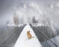 Hond op de brug ivano-Frankovsk Stock Foto's