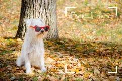 Hond op de de herfstzon royalty-vrije stock foto's