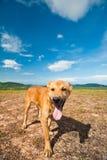 Hond op de heuvel met blauwe hemel Royalty-vrije Stock Afbeelding