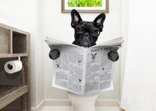 Hond op de lezingskrant van de toiletzetel royalty-vrije stock foto