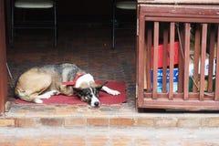 Hond op de portiek stock afbeelding