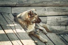 Hond op de stappen stock fotografie