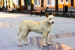 Hond op de straat Royalty-vrije Stock Foto's