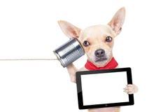 Hond op de telefoon stock afbeelding