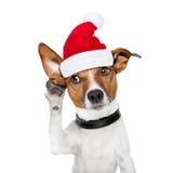 Hond op de telefoon voor Kerstmis Royalty-vrije Stock Foto