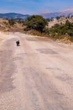 Hond op de weg Stock Fotografie