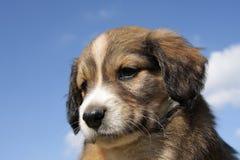 Hond op een achtergrond van de hemel Royalty-vrije Stock Afbeeldingen