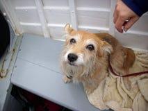 Hond op een boot royalty-vrije stock afbeeldingen