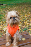 Hond op een de herfstgang Royalty-vrije Stock Foto