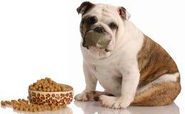 Hond op een dieet Stock Foto's
