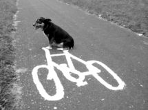 hond op een fiets stock foto